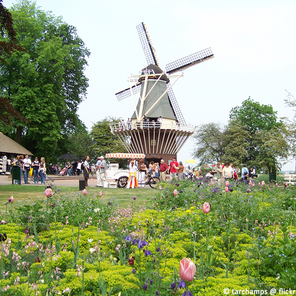 holland-tulpen_tarchamps